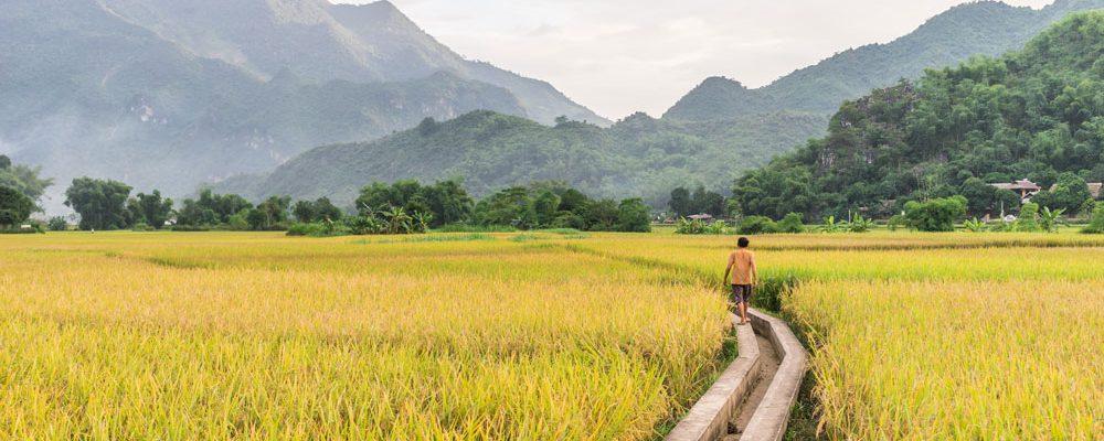 FAO next generation irrigation