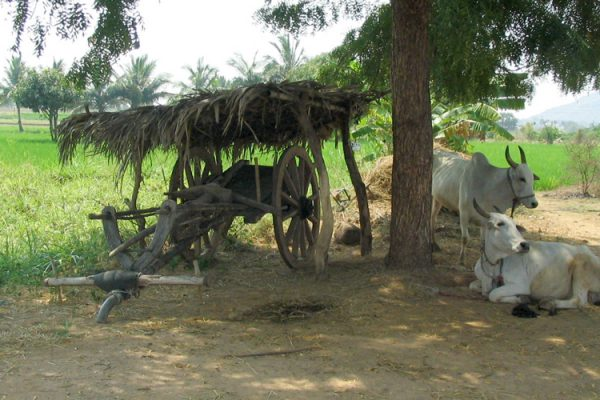 India-Drought-Mitigation-feature